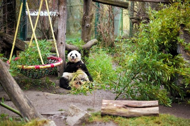 Zoološke stranice zooloških vrtova