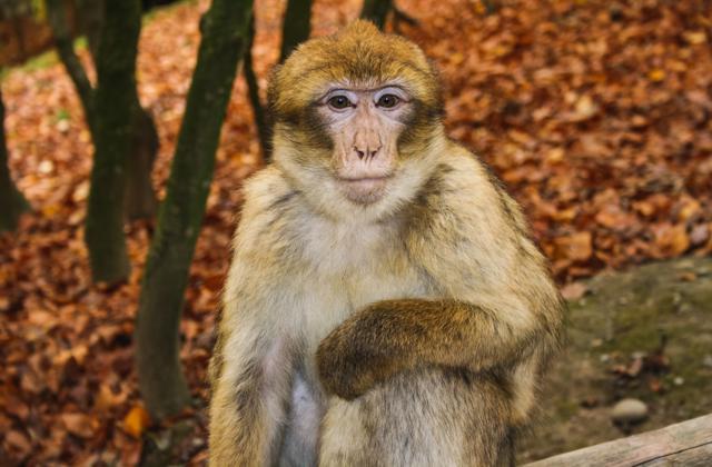 Čarolija Koruške i posjet Parku Majmuna
